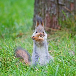 squirrel-tai-chi_1779685i